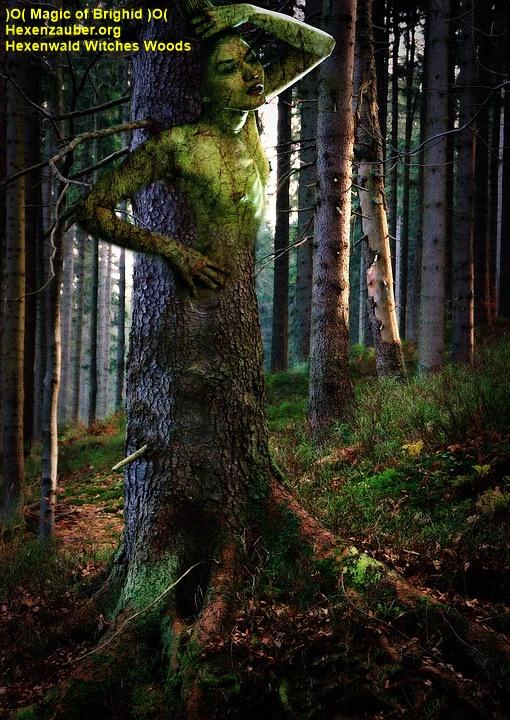 magischer wald, feenwald, zwergenwald